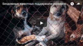 Безпритульних тварин підтримали українські зірки - соціальний ролик