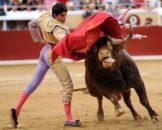 Іспанський суд знову дозволили бої биків в Каталонії