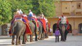 World Animal Protection домагається припинення продажу турів, які пропонують розваги з дикими тваринами